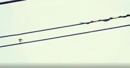 সাপের সঙ্গে পাখির খেলা, অবাক লাখো দর্শক